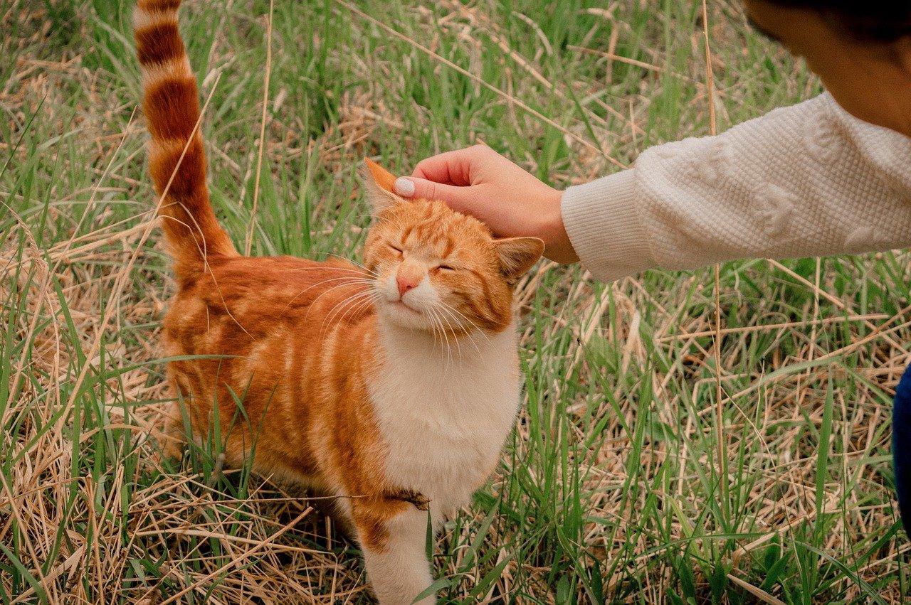 person rubbing cat's ears