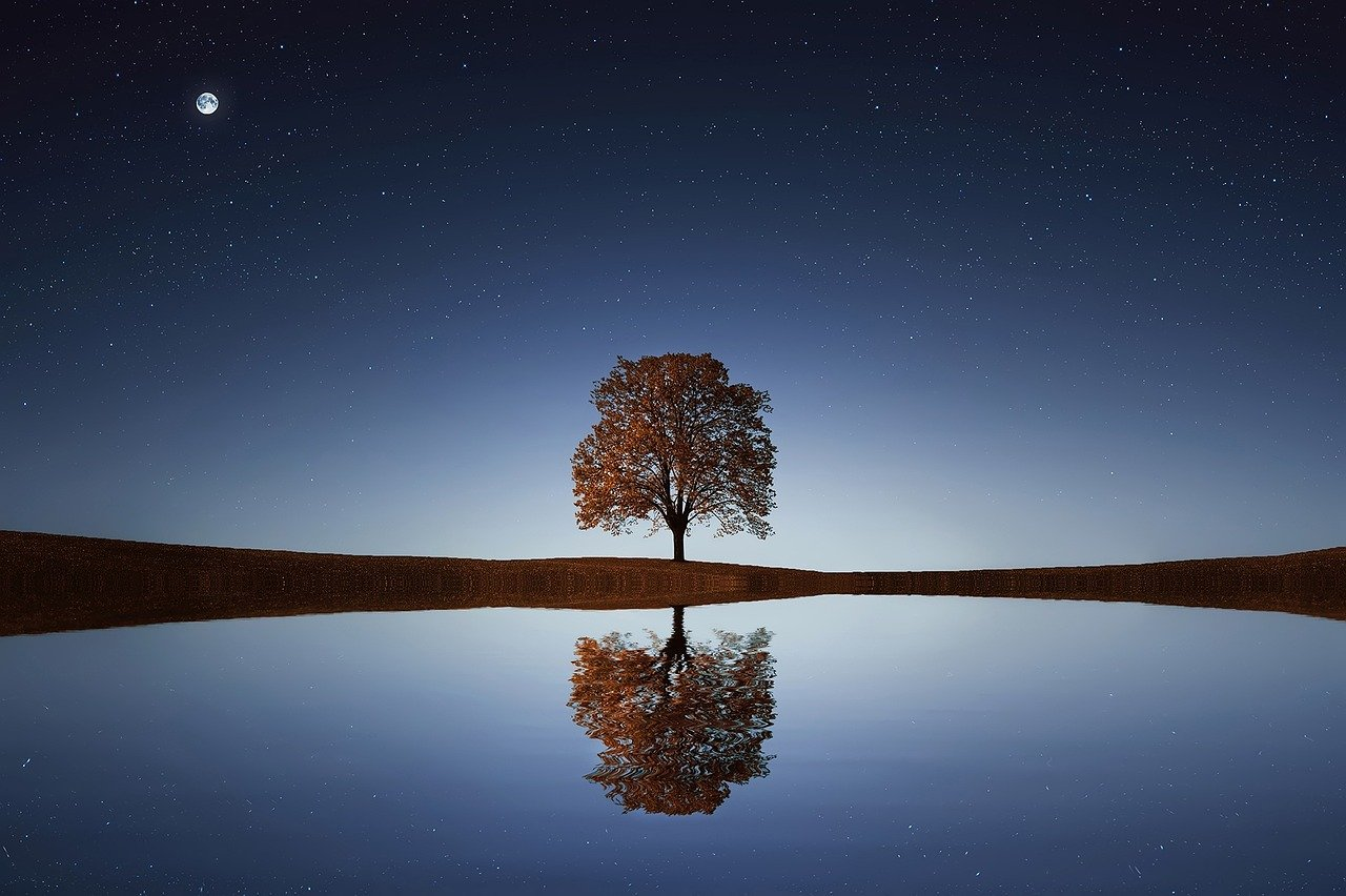 tree with calm reflection in water and night sky