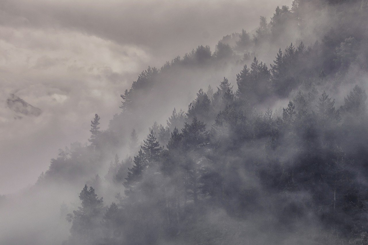 Mountains and trees obscured by fog