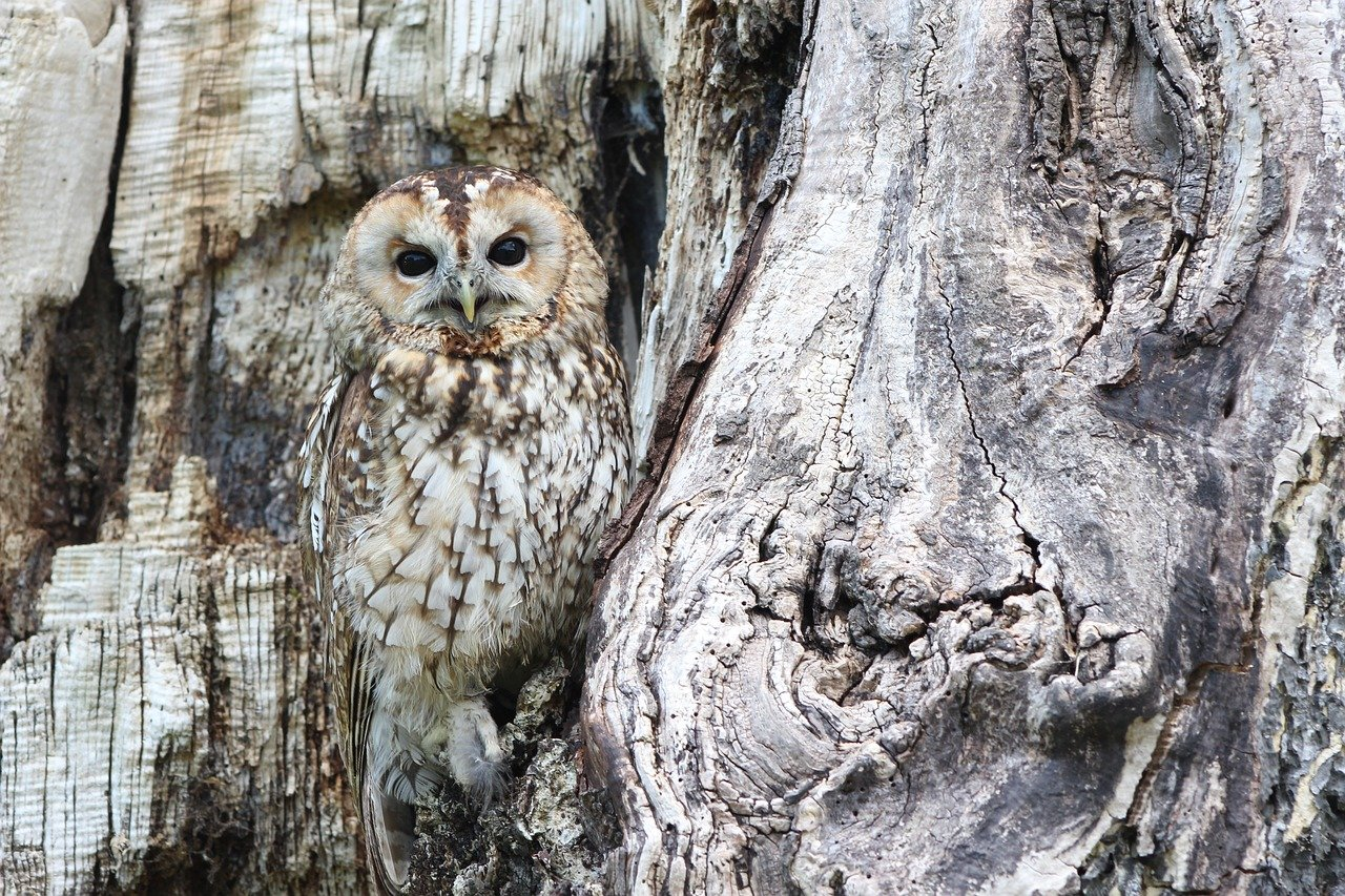 Owl blending in with tree