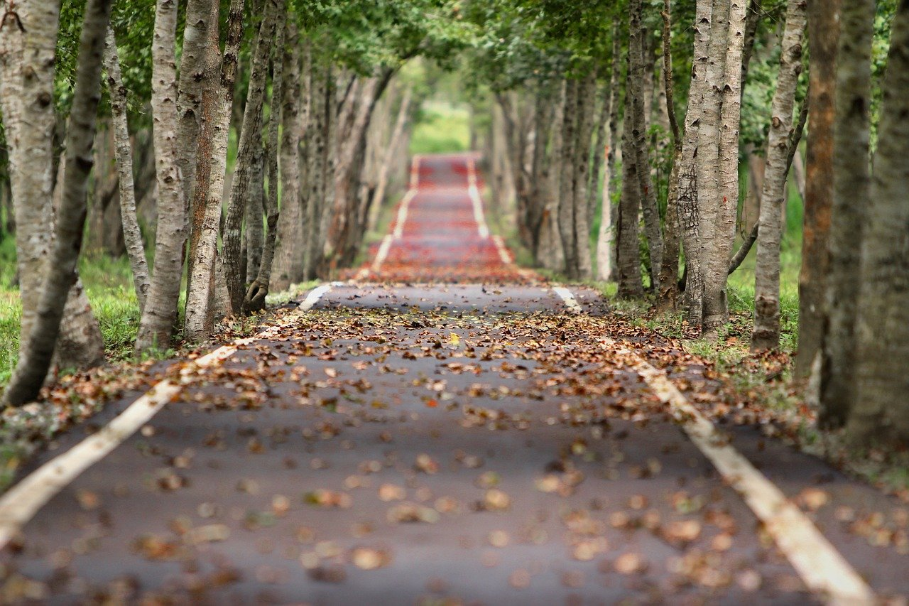 leaf-covered road with trees on both sides