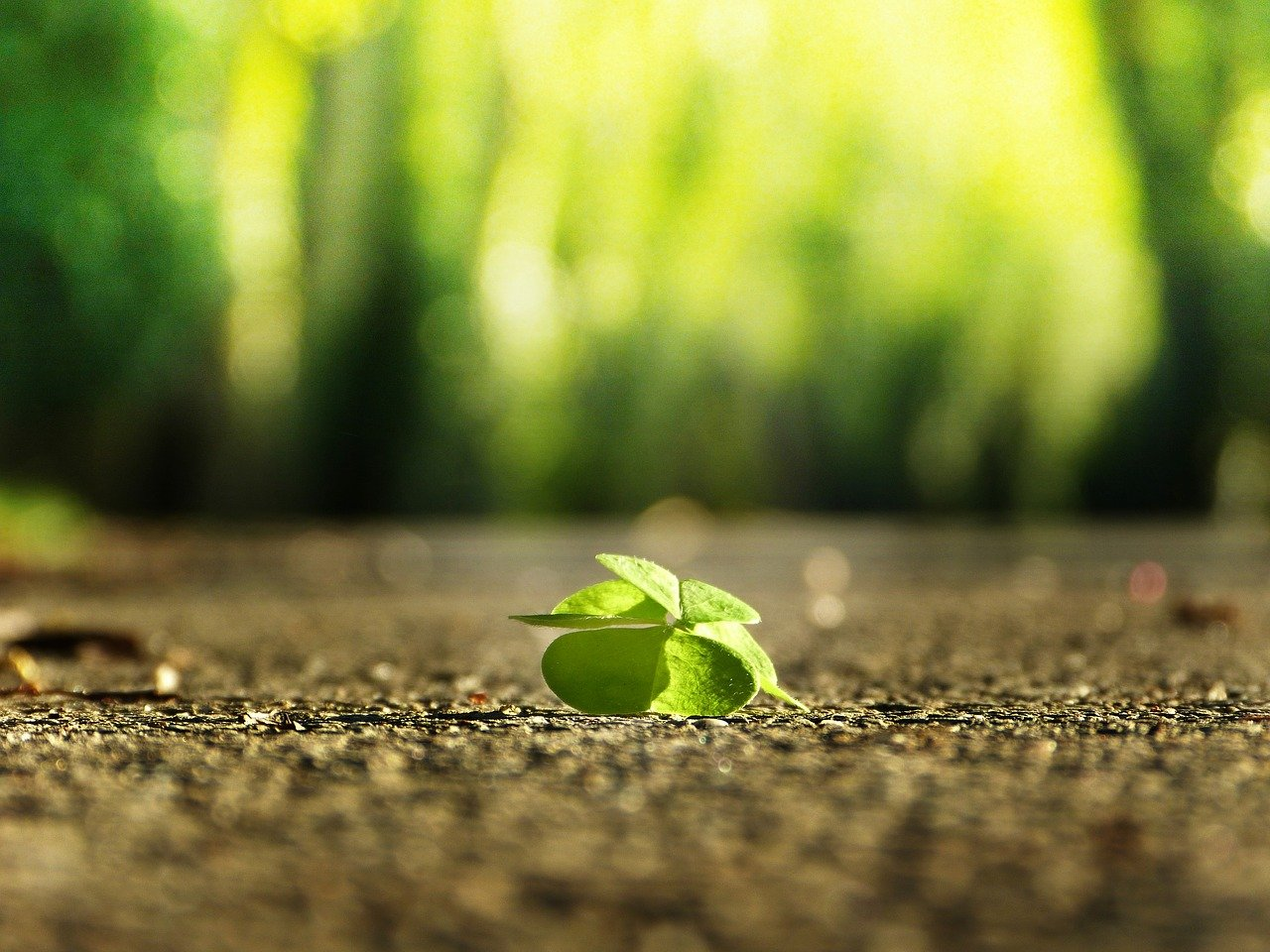 clover on the ground