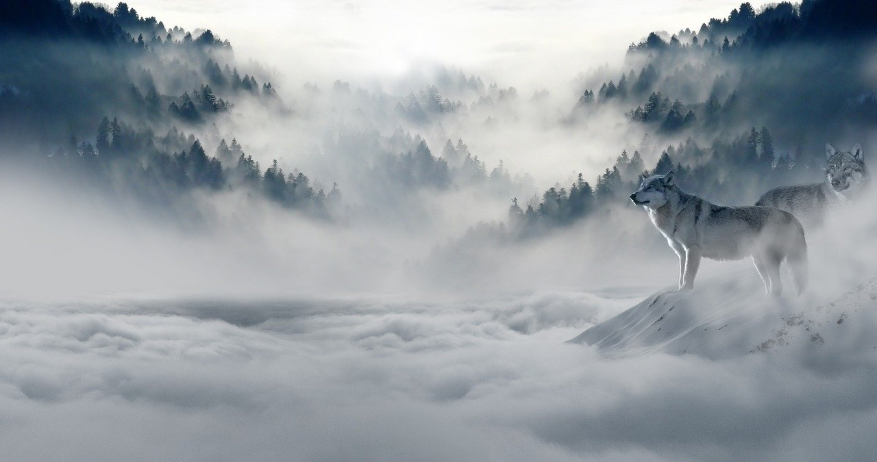 wolves with clouds and mountains in winter