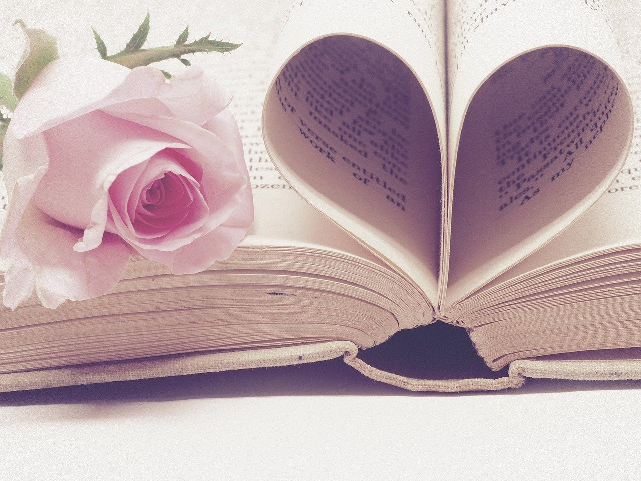 rose with open book pages forming a heart